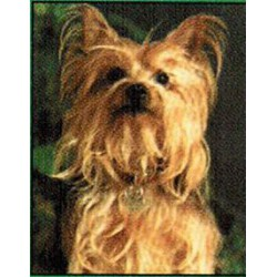Yorkshire Terrier Classic...
