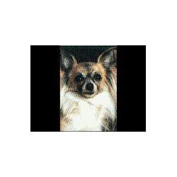 Chihuahua langhaar Magneet