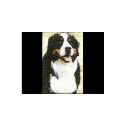 Berner Sennenhond Glossy kaart