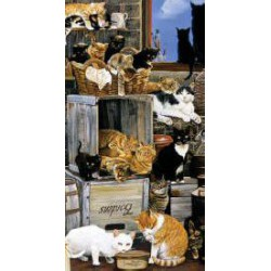 A Company of Cats slimcard